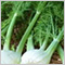 fennel_leaves